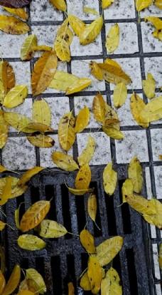 下水道与黄叶