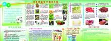 食品药品安全宣传栏 健康教育