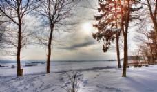 冬季雪天树林风景摄影图