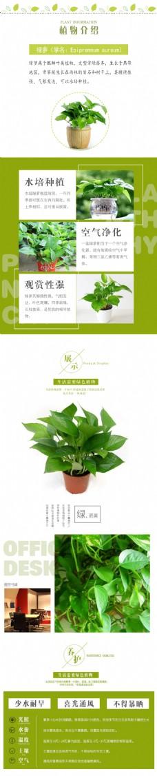 绿色植物绿萝淘宝详情页