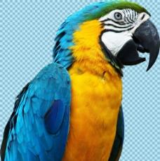 漂亮的可爱鹦鹉免抠png透明图层素材