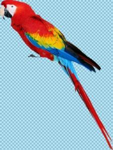 彩色羽毛的鹦鹉免抠png透明图层素材