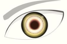 眼睛效果图