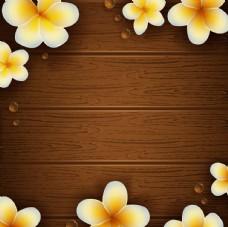 木纹鸡蛋花