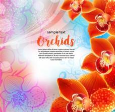 橙色兰花背景矢量素材