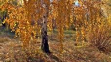 秋季树木风景视频