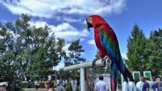 人物观赏鹦鹉视频