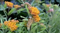橘色花朵风景视频