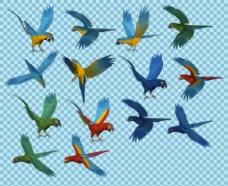 各种飞翔的鹦鹉免抠png透明图层素材