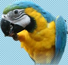 蓝绿色鹦鹉头部免抠png透明图层素材