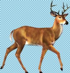 散步的鹿图片免抠png透明图层素材