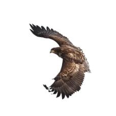 展翅飞翔雄鹰元素