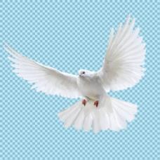 白色飞翔的和平鸽子免抠png透明图层素材