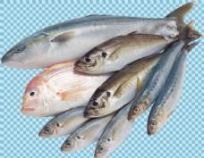 多种鱼类图片免抠png透明图层素材