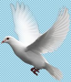 挥翅膀飞翔的鸽子免抠png透明图层素材
