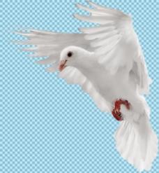 白色羽毛飞翔鸽子免抠png透明图层素材