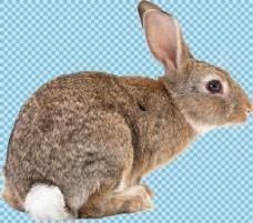 蹲着的杂毛兔子免抠png透明图层素材