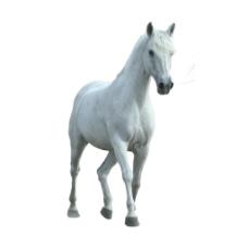 白色骏马散步元素