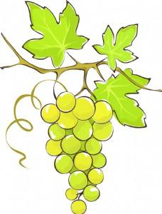 手绘青色的葡萄插画