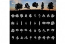 20种大树树木剪影图案PS笔刷素材