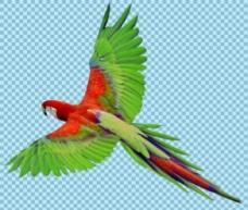 绿色红色鹦鹉免抠png透明图层素材