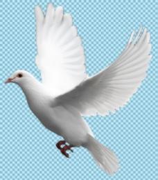 飞翔的白鸽子免抠png透明图层素材