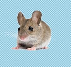 可爱大眼睛老鼠免抠png透明图层素材