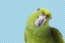 绿色羽毛鹦鹉免抠png透明图层素材
