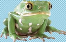 大眼睛绿色青蛙免抠png透明图层素材