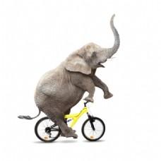 杂质大象骑单车元素
