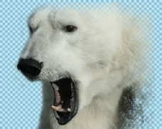 咧嘴的北极熊免抠png透明图层素材