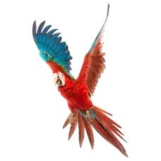 彩色鹦鹉飞翔元素