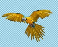 黄色鹦鹉免抠png透明图层素材