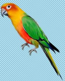 彩色羽毛站树枝上的鹦鹉免抠png透明素材