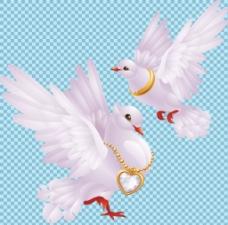 两只白色鸽子免抠png透明图层素材