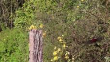 实拍花卉树木视频背景