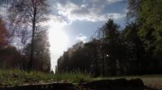 逆光森林树木风景视频