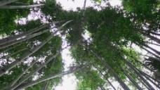 自然竹林风景实拍视频