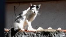 家庭宠物猫咪视频