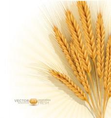 金黄色麦穗