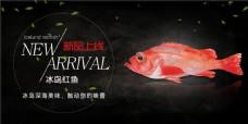 红鱼网页banner
