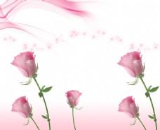 玫瑰花广告背景素材
