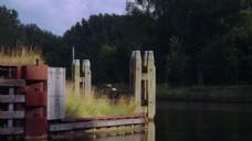 野外树木河流视频