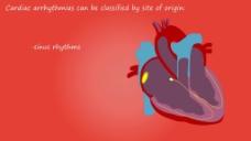 人物心脏器官视频拍摄