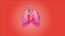 人物器官肺视频