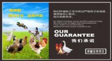 超市三鸟广告模板