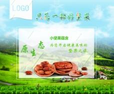 坚果森林海报