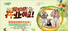 宠物美容宣传海报