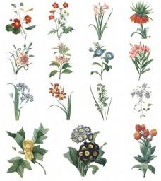 复古手绘花朵插画