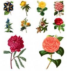 艳丽植物花朵背景